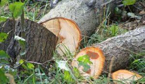 В Челябинске срубят все больные деревья