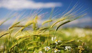 МЧС прежупредило о сильном ветре 10 июля на Южном Урале