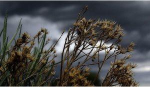 В Челябинской области прогнозируют сильный дождь с градом и сильный ветер
