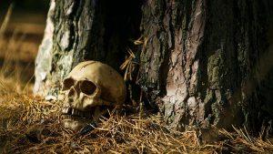 Привязанный к дереву скелет человека нашли в Челябинской области