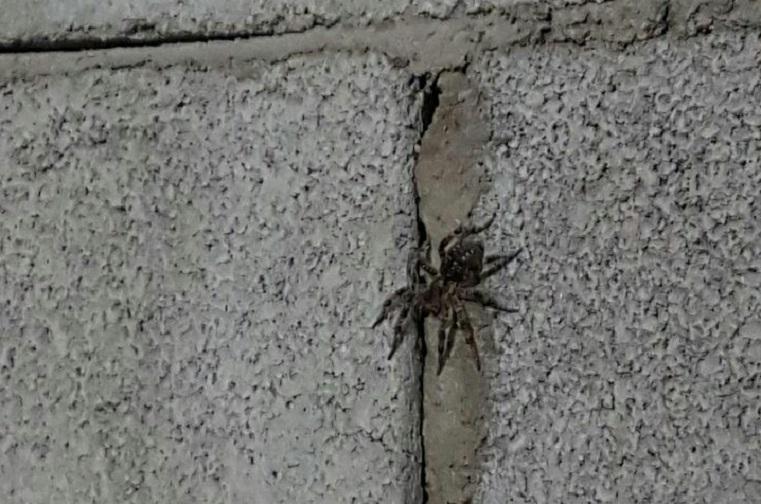 В Челябинской области женщина нашла в гараже смертельно опасного паука