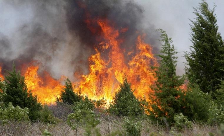 Война со стихией. На Урале на пути огня встали лесники