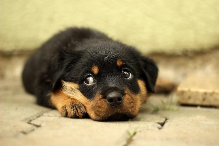 обвиняют в издевательствах собака