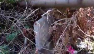 В Миассе вандалы сложили спиленные деревья на могилы