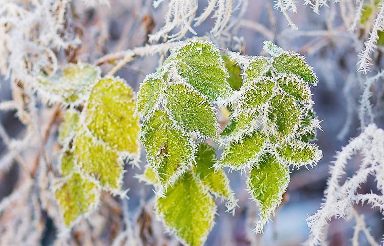 Снег и заморозки. Непогода не отпускает Южный Урал