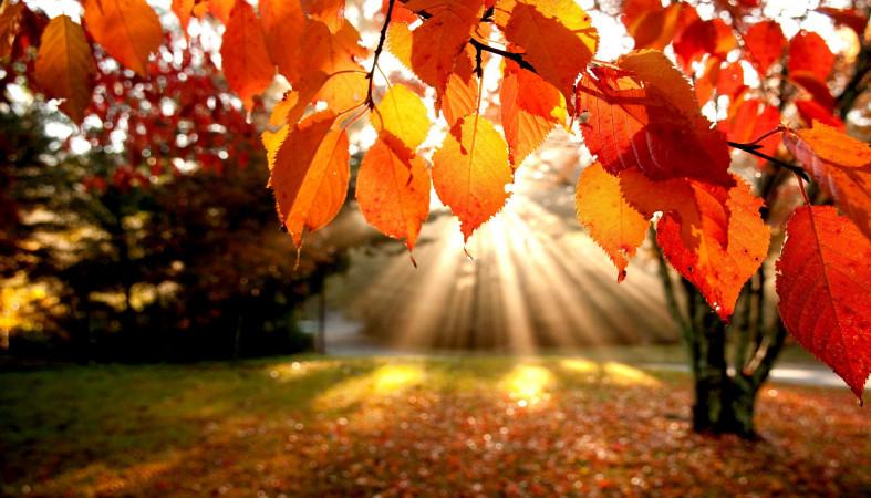 Сентябрь горит. Синоптики рассказали, какая погода ждет Урал