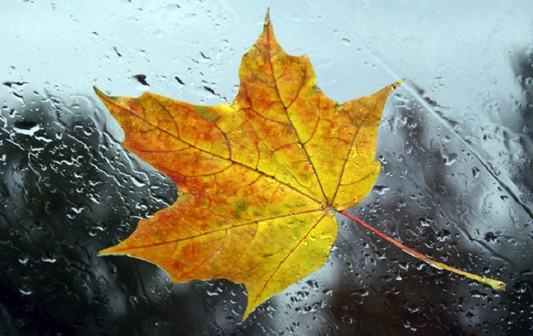 А дождь все льет и льет. Погода в ближайшие дни не порадует жителей Урала