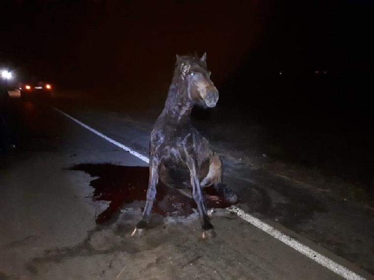 Спасти не удалось. На Южном Урале автомобиль врезался в лошадь