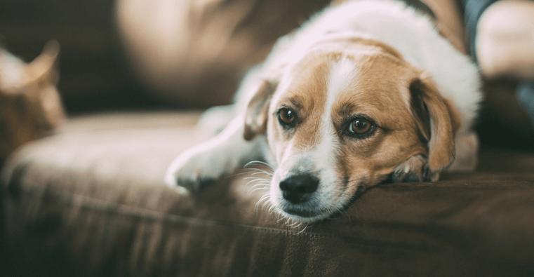 Химическая атака. На Южном Урале неизвестные массово травят собак