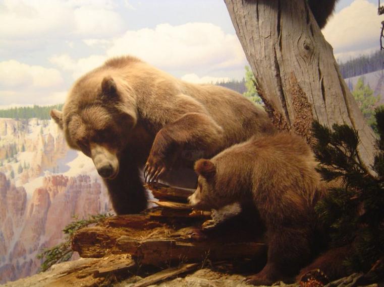 Кладбище древних животных. На Урале найдены останки пещерных медведей