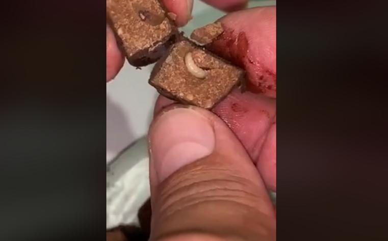 Шоколад с «белком». На Урале продают конфеты с живыми червями