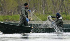 Сома спасли от браконьеров на Южном Урале