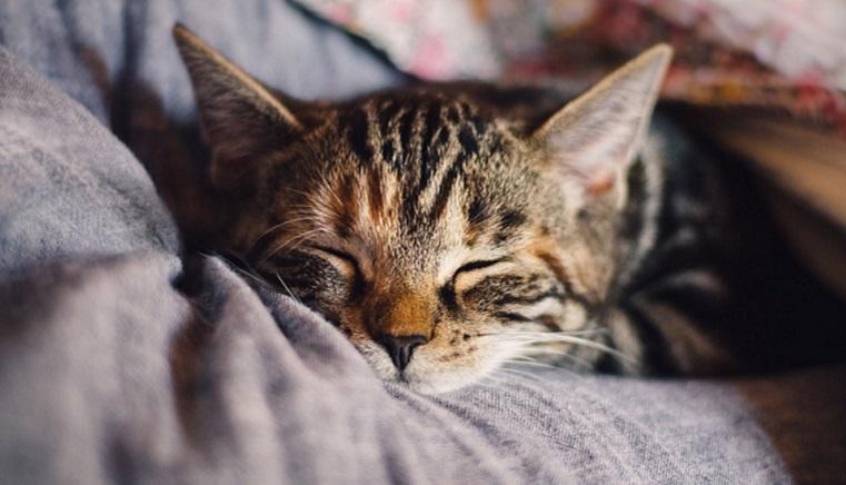 Спать меньше. Эксперты выяснили, какая продолжительность отдыха полезна для мозга