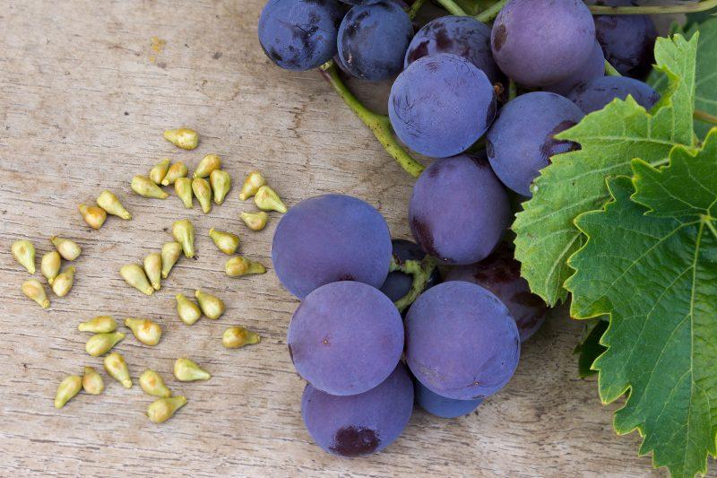 Медики рассказали о пользе винограда