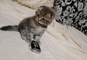 7 миллионов. В Челябинске продается самый классный котенок в мире