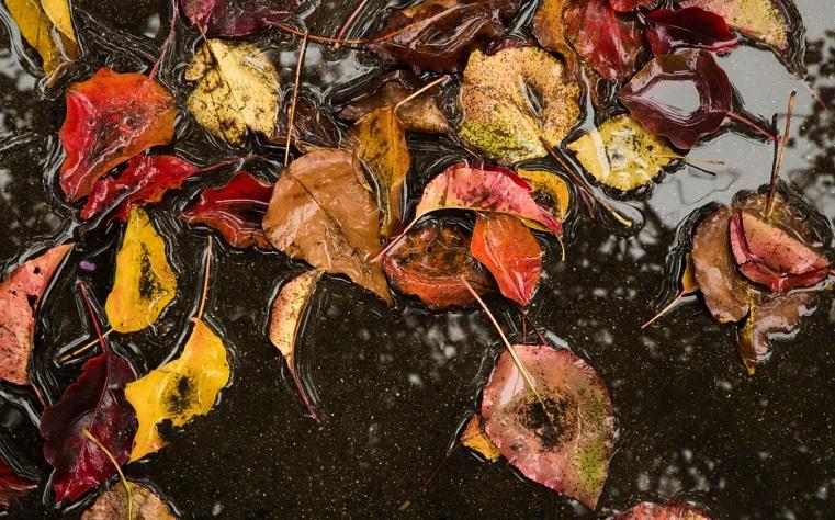 Дождь на весь день. Синоптики рассказали о погоде в Челябинской области
