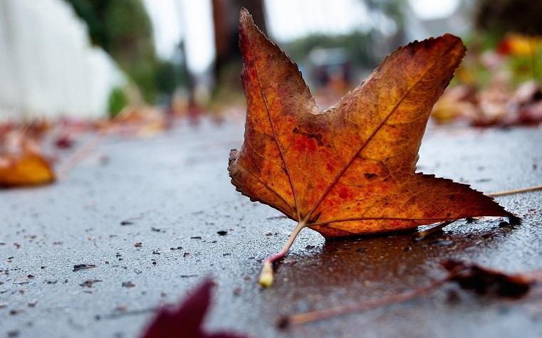 Ужас метеопата. Синоптики дали прогноз погоды на ноябрь для Урала