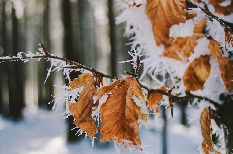 Морозы отступают. Резкий перепад температур ожидается на Южном Урале