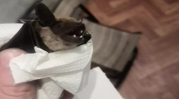Дракула в образе. Квартиры жителей Урала атакуют летучие мыши