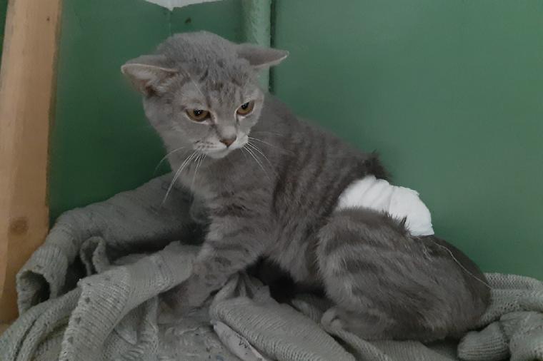 Вопиющая жестокость. В Челябинской области неизвестные облили кошку кипятком