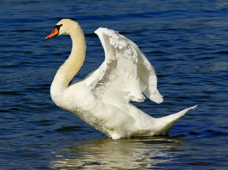 Южноуральцы спасли краснокнижную птицу со сломанным крылом
