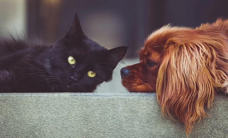 Каждой кошке по чипу. Россиян обяжут регистрировать домашних животных