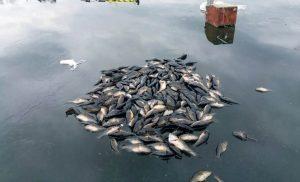 Уральская аномалия. В озере Карасье пропали все караси