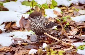 Звездный ворон. Птицу с феноменальной памятью нашли на Урале