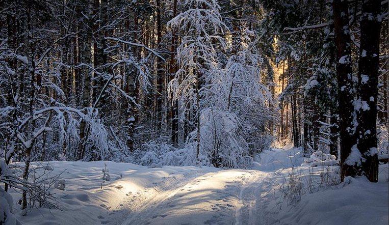 В лесу на Южном Урале нашли мертвым пропавшего мужчину