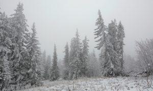 Синоптики считают ноябрь аномально холодным