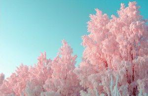 Розовая зима. Аномальное тепло идет в Челябинск