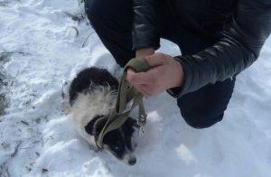 Неравнодушные южноуральцы спасли двоих щенков