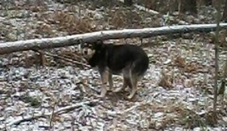 Одинокий пес уже неделю сидит на остановке в Миассе