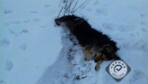 Живодер задушил собаку в одном из садов на Южном Урале