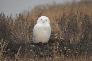 Гость из Хогвартса. Магическую птицу нашли на Южном Урале