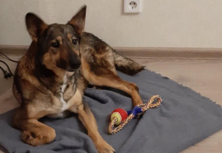 Собака, которую сбили на трассе под Челябинском, вернулась домой в Сургут