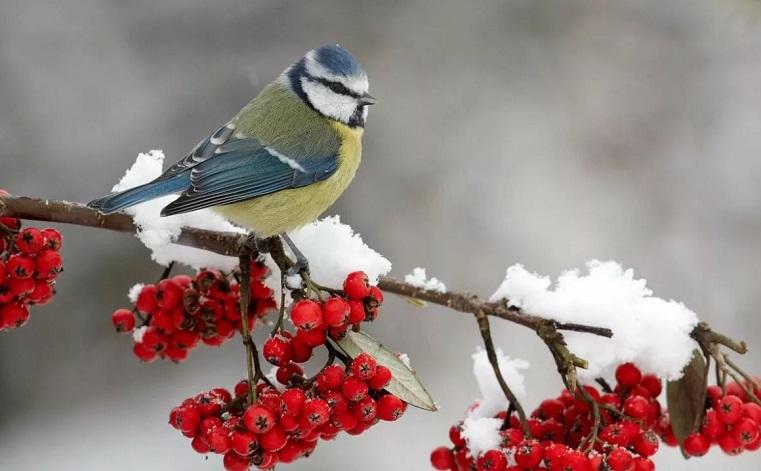 Европейская зима. Синоптики рассказали, какая погода будет в Челябинской области