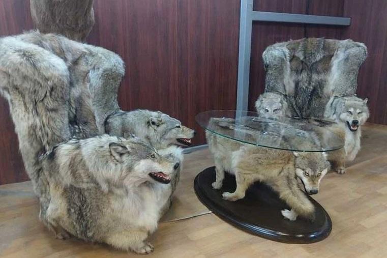 Морды с оскалом. Россиян возмутила мебель из шкур волков
