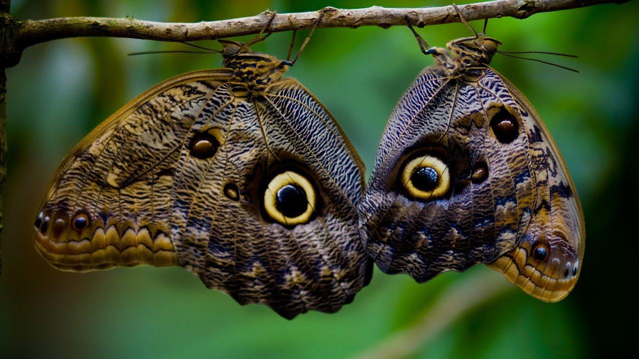 Уголок тропиков в квартире. Как на Урале появились экзотические бабочки?