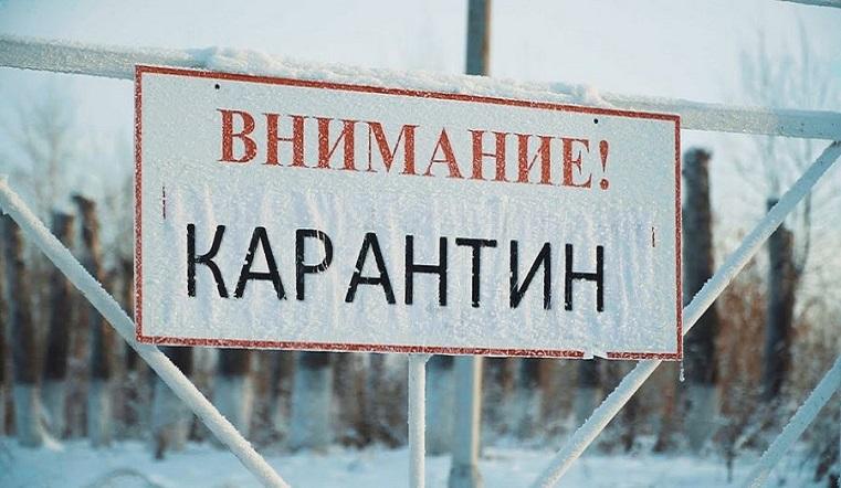 Смертельная опасность. Очаги бешенства обнаружили в Челябинской области