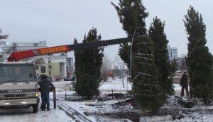 В центре Челябинска начали высаживать кедры