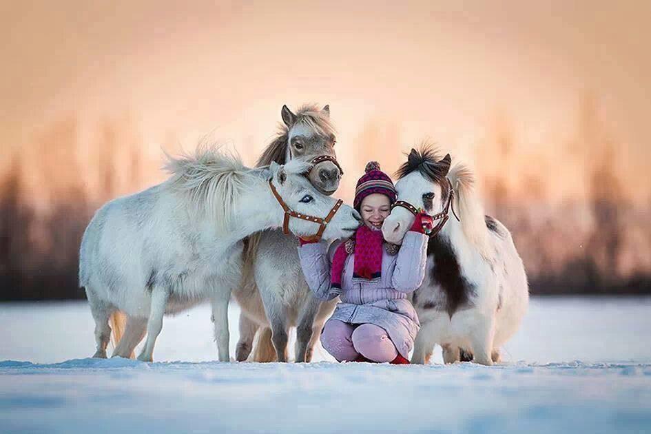 Жители Челябинска отказались кататься на лошадях по праздникам