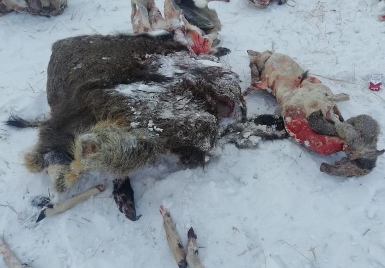 Жестокая расправа. В Челябинской области нашли свалку костей и трупов животных