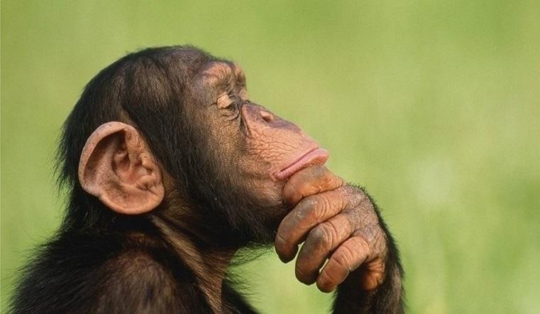Волосатые металлисты. Ученые выяснили, что обезьяны умеют играть рок