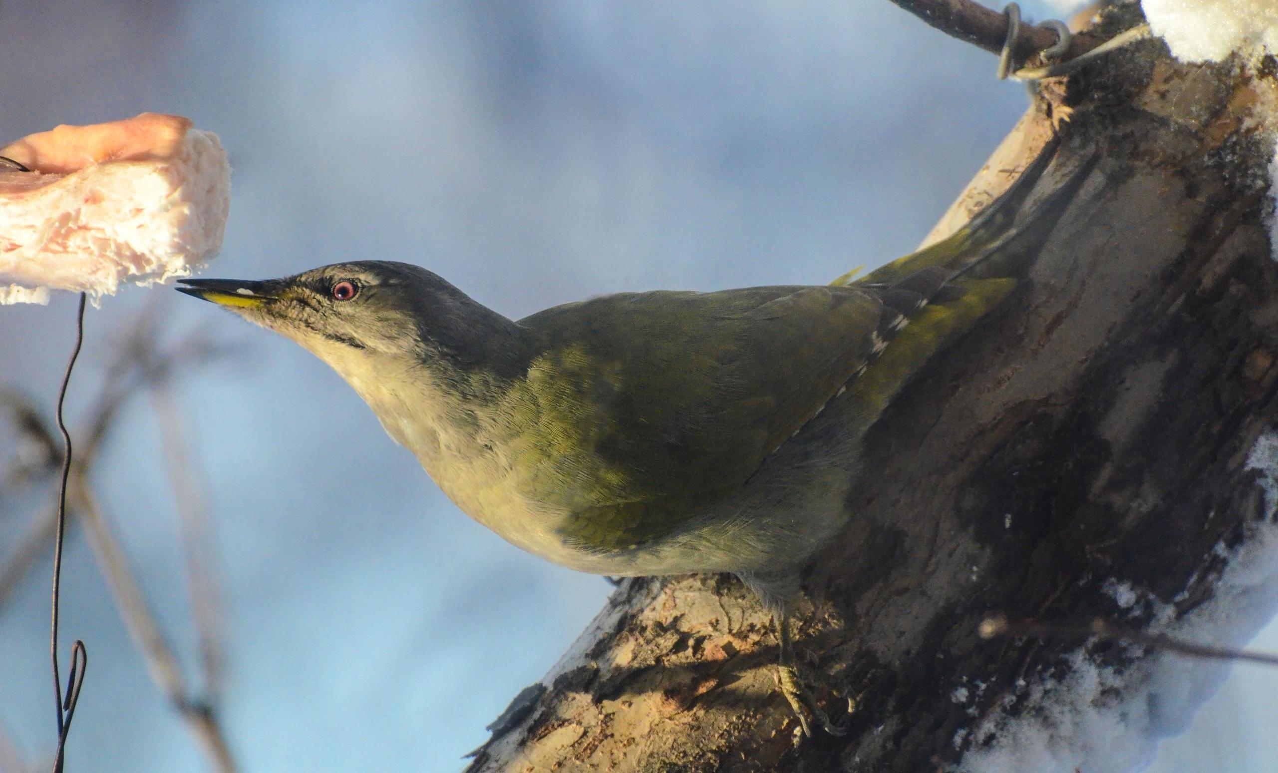 Редкий кадр. Седых птиц заметили на Южном Урале