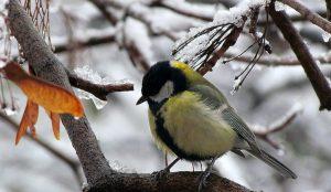 Еще померзнем. Снег и метели прогнозируют на Южном Урале