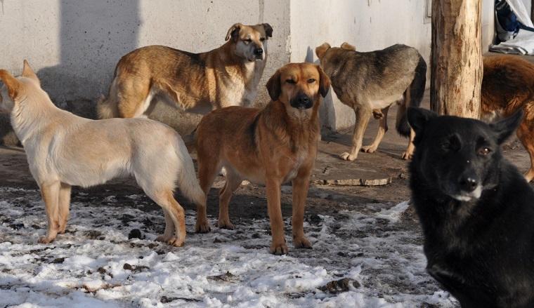 На Южном Урале стая бродячих собак держит в страхе пешеходов и автомобилистов ВИДЕО