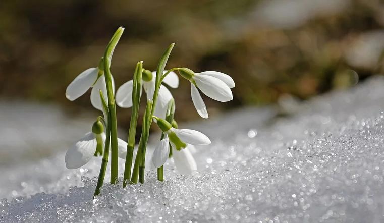 Выше нормы. Синоптики рассказали о погодных аномалиях в начале марта