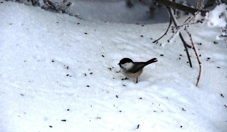 Когда растает снег. Названа дата начала весны на Урале