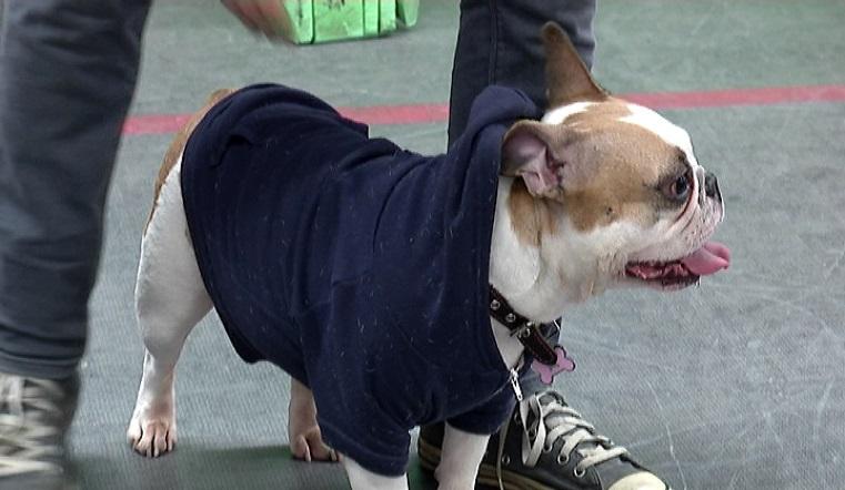 "Чудеса на виражах. Собака-спортсменка из Челябинска ""пересела"" на сноуборд"